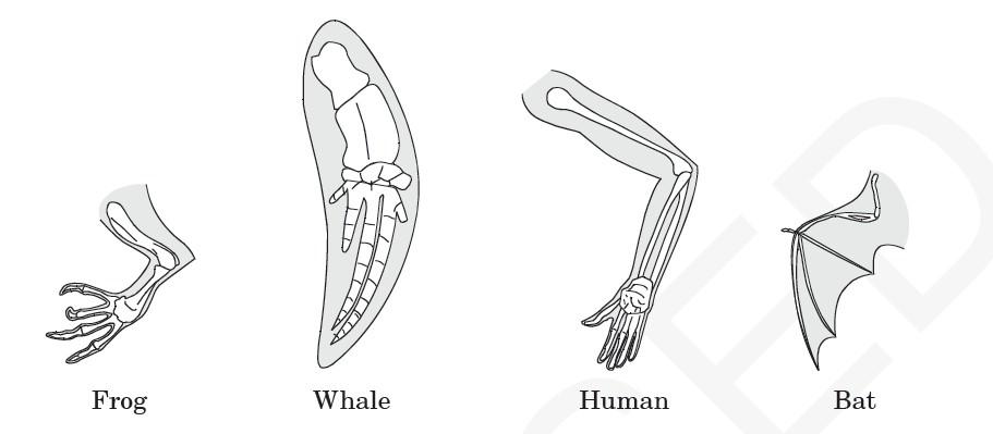 diagram of genetic engineering animals